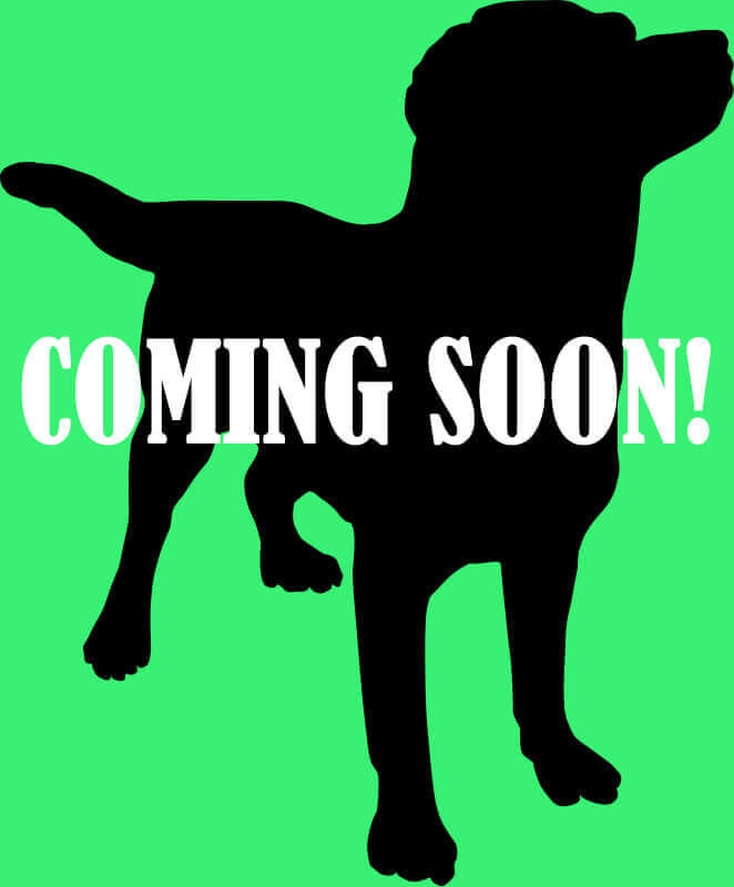dog-coming-soon-2_1_orig